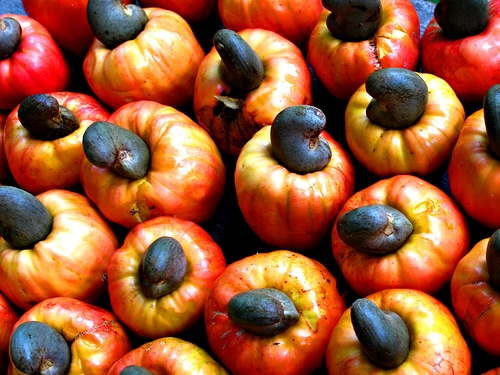Cashew Fruit 1